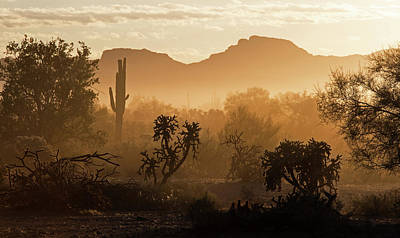 Photograph - Desert Dust by Sue Cullumber