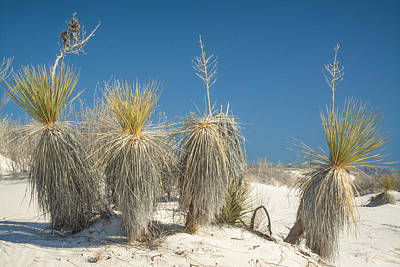 Travel Pics Royalty-Free and Rights-Managed Images - Desert Dwellers by Racheal Christian