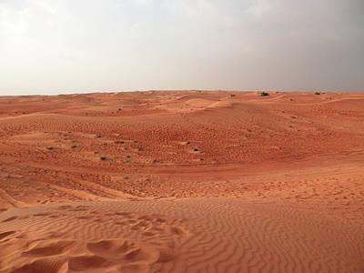 Photograph - Desert Evening by Pema Hou