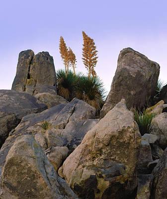 Photograph - Desert Flags by Paul Breitkreuz