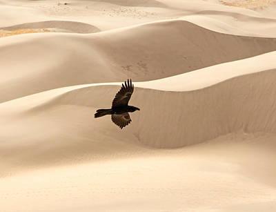 Photograph - Desert Flight by Nicholas Blackwell