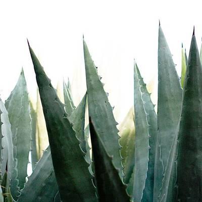 California Wall Art - Photograph - Desert Flora With Sharp Succulent by Blenda Studio