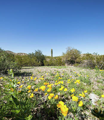Photograph - Desert Flowers And Cactus by Ed Cilley