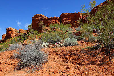 Photograph - Desert Flowers by Sharon I Williams