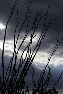 Photograph - Desert Foliage At Dusk by Mary Bedy