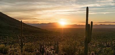 Photograph - Desert Garden by Scott Rackers