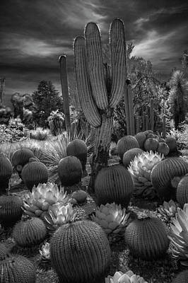 Photograph - Desert Garden With Cacti At The Huntington Botanical Garden In California by Randall Nyhof