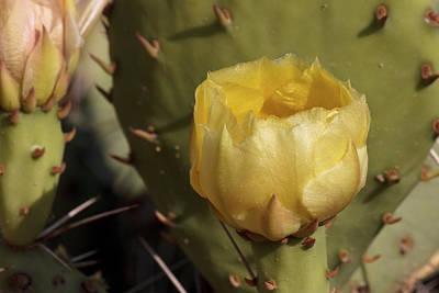Photograph - Desert Glow by Becky Titus
