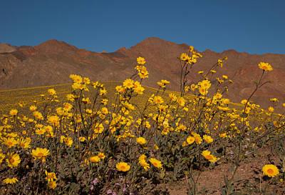 Photograph - Desert Gold 3 by Susan Rovira