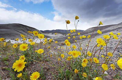 Desert Gold In Death Valley Art Print by Dung Ma