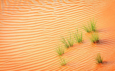 Photograph - Desert Grass by Alexey Stiop
