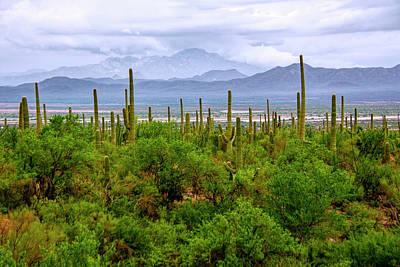 Photograph - Desert Green by Barbara Manis
