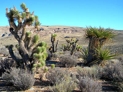 Photograph - Desert Greenery by Frank Wilson