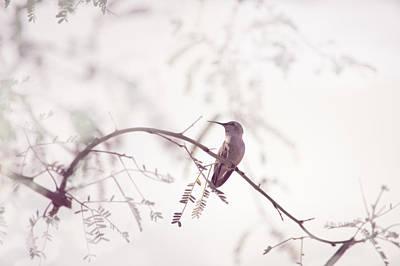 Desert Hummingbird II Art Print by Carolina Liechtenstein