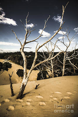 Deadwood Photograph - Desert In The Middle Of The Woods by Jorgo Photography - Wall Art Gallery