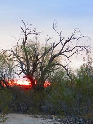 Photograph - Desert Ironwood Sunrise by Judy Kennedy