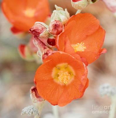 Photograph - Desert Kaminari Reds by L Cecka