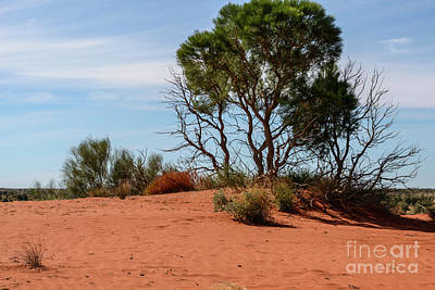 Photograph - Desert Landscape 01 by Werner Padarin