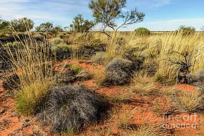 Photograph - Desert Landscape 02 by Werner Padarin