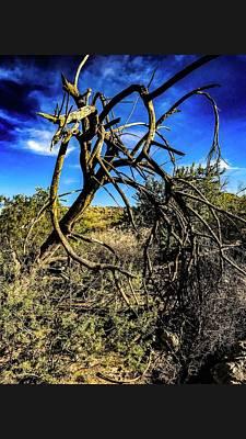 Thomas Kinkade Rights Managed Images - Desert landscape series 2 Royalty-Free Image by Rick Reesman