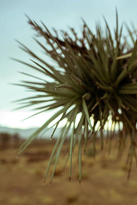Photograph - Desert Leaves by Smoked Cactus