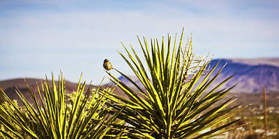 Photograph - Desert Life by Tatiana Travelways