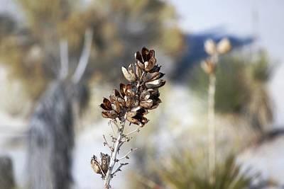 Southwest Landscape Mixed Media - Desert Magic by Barbara Chichester