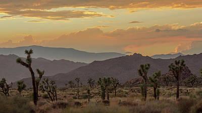 Photograph - Desert Magic by Smoked Cactus