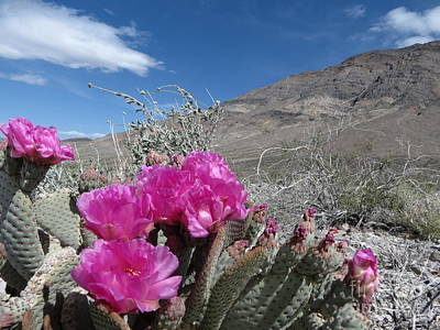 Photograph - Desert Meets Mountain by Fortunate Findings Shirley Dickerson
