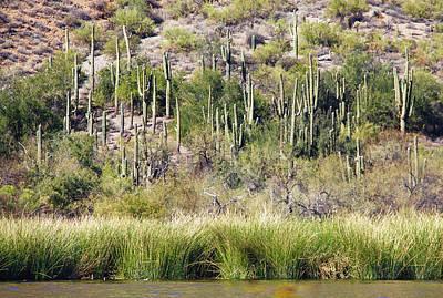 Photograph - Desert Meets Water by Susan Crossman Buscho