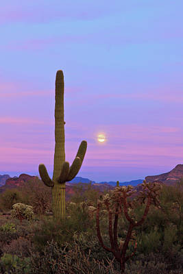 Photograph - Desert Moon by Rick Furmanek