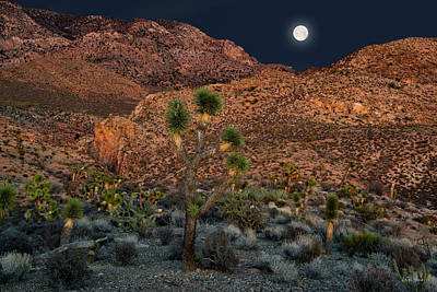 Photograph - Desert Moonrise by Leland D Howard