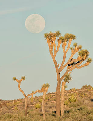 Photograph - Desert Moonrise by Loree Johnson