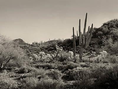 Desert Morning Art Print by Gordon Beck