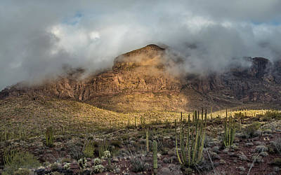 Organ Pipes Photograph - Desert Morning by Joseph Smith
