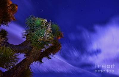 Photograph - Desert Night Light-play by Angela J Wright