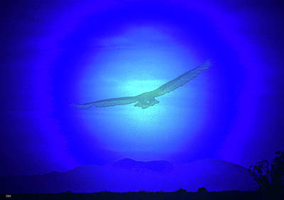 Birds In Flight At Night Digital Art - Desert Nights by Debra     Vatalaro