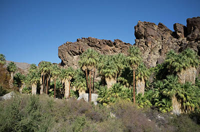 Photograph - Desert Oasis V by Frank DiMarco