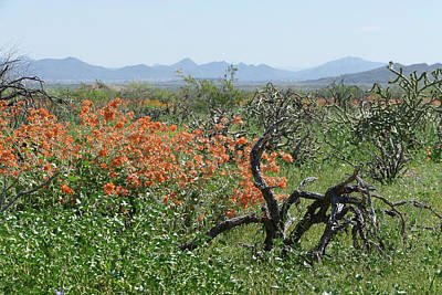 Photograph - Desert Orange by Laurel Powell