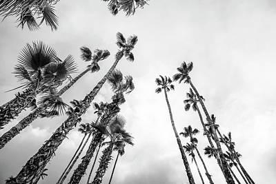 Photograph - Desert Palms Twilight by Amyn Nasser