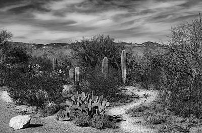 Photograph - Desert Passage by Mark Myhaver