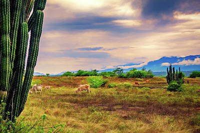 Photograph - Desert Pasture by Maria Coulson