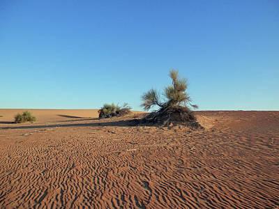 Photograph - Desert  by Pema Hou