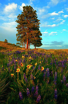 Hillside Photograph - Desert Pines Meadow by Mike  Dawson