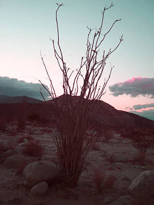 Field. Cloud Photograph - Desert Plant And Sunset by Naxart Studio