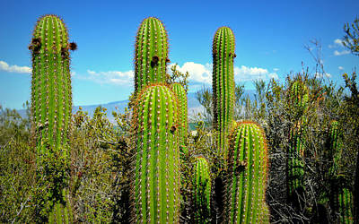 All In The Family Photograph - Desert Plants - All In The Family by Glenn McCarthy