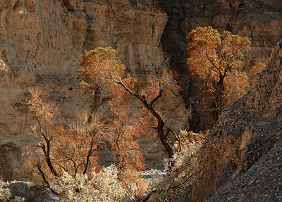 Photograph - Desert Plants by Inge Riis McDonald
