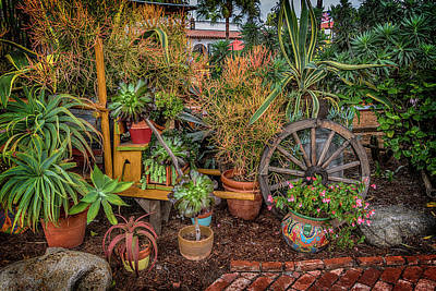 Photograph - Desert Plants Old Town San Diego Ca_7r2_dsc3181_17-01-14 by Greg Kluempers