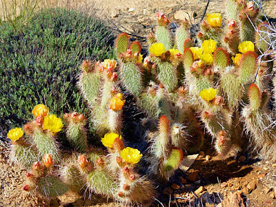 Photograph - Desert Plants - Yellow Cactus Flowers by Glenn McCarthy Art and Photography