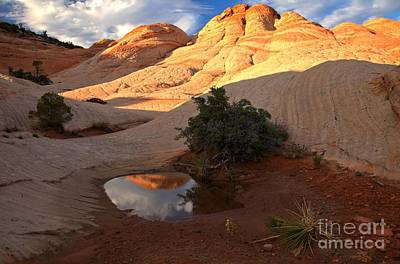 Photograph - Desert Pool Mirror by Adam Jewell